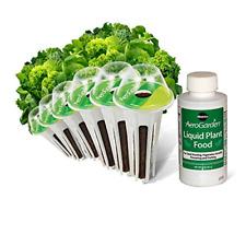 Heirloom Salad Greens Seed Pod Kit Heirloom Salad Greens 6 Pod Black Seeded 6