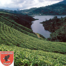 400g Ceylon BOPF TEA (Broken Orange Pekoe Fannings) Schwarzer Hochland Tee DI