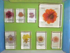 8 Flower Collection Box Set in 8 clear block Education Plant Specimen Kit