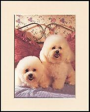 BICHON FRISE CHARMING LITTLE DOG PRINT MOUNTED READY TO FRAME 2 CUTE DOGS
