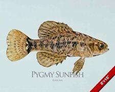 PYGMY SUNFISH FISH PAINTING FISHING ART REAL CANVAS PRINT