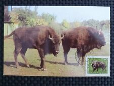 ROMANIA MK BISON WISENT MAXIMUMKARTE CARTE MAXIMUM CARD MC CM c1052