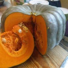 20+ Pumpkin Seeds Vegetable Sweet Pumpkin Vine 100% Organic Rare NO GMO