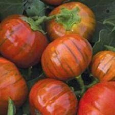 V123 Eggplant Turkish Orange x50 seeds Vegetable Garden Cooking Roast Asian Rare