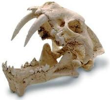 Hoplophoneus Saber Tooth Ancestor Skull Fossil Replica Museum Quality Oak Stand