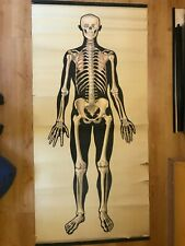 Original big vintage medical pull down school chart of sceleton man