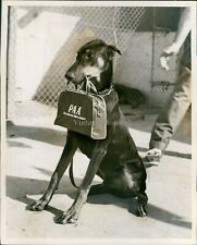 1957 Doberman Pinscher Dog Tourist Miami Fl Uruguay Bag Carry Animal Photo 8X10