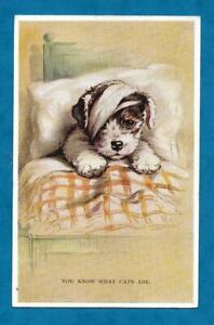 """1935 LUCY DAWSON """"MAC"""" POSTCARD SEALYHAM TERRIER PUPPY BANDAGED & IN BED"""