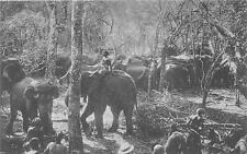 br104210 elephants in kraal ceylon  real photo sri lanka folklore