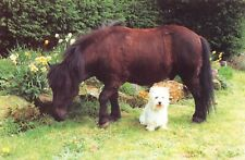Postcard, Good Companions, William the Shetland Pony & Truffles the Westie 11N