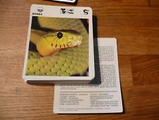 FICHE CARD ANIMAUX ANIMAL snake serpent mamba    REPTILE