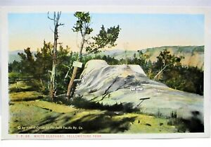 1920s POSTCARD WHITE ELEPHANT,  YELLOWSTONE PARK,BY NORTHERN PACIFIC RAILWAY