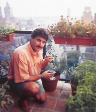 KEITH HERNANDEZ clipping St. Louis Cardinals color photo 1990s gardening NY Mets
