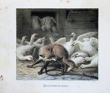 Ludwig Beckmann Volpe ladro oca FATTORIA MAIALE caso pericolo Trap Fox