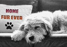 Personalised Rescue Dog d'adoption Crossbreed Scruffy caritatif Any Occasion Card