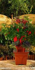 Patio Garden Kit Planter Hydroponics Strawberry Herb Balcony Terra Cotta