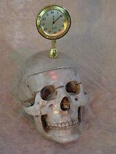 Skull w/ Clock Halloween Prop Skull, NEW