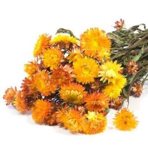 Bouquet Decoration Wedding Dried flowers Helichrysum natural orange