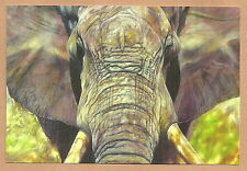 """Südafrika - Postkarte Elefant """"The Big Five"""" 2014 Neu  11,5 x 17 cm"""