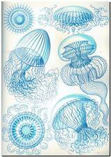 "ERNST HAECKEL CANVAS PRINT Art Nouveau Blue Jelly Fish 8""X 10"" Leptomedusae"
