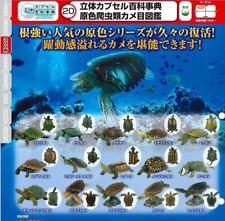 Japan Takara Tomy Yujin Land Sea Turtle Reptile Tortoise Figure Model Set 15pcs