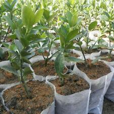 200Pcs Biodegradable Non-Woven Nursery Bags Plant Grow  Bag Pouch Seedling Pots