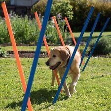 FUN Dog Activity Weave polacchi addestramento AGILITY Slalom CORSO CANI Fitness KIT CUCCIOLO