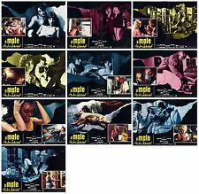 IL MALE DI ANDY WARHOL FOTOBUSTE 10 PZ FACTORY FILMS HORROR 1977 USE LOBBY CARD