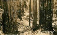 Humboldt California 1930s Redwood Highway RPPC Photo Postcard Patterson 11654