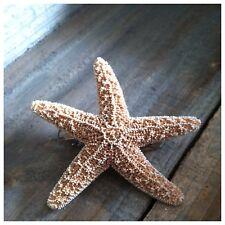 Sugar Starfish Barrette - Mermaid Star hair hairclip beach clip Ariel Accesories