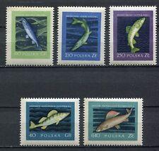 35649) POLAND 1958 MNH** Fish 5v Scott# 810/14