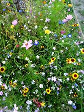Blühende* Blumen* Bienen  Wiese Wildblumen bunte Mischung
