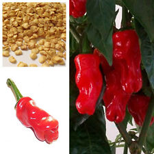 Penis Chilli Red Hot Peter Pepper Willy Chillies, Buy 2 Get 15% Discount