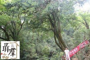 Yunnan pu er  Snowy mountain 2019 sheng puer DA XUE SHAN raw puerh  100g
