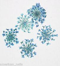 1 boite de Véritable FLEURS SECHEES Dentelle Bleu Turquoise bijou ongle Nail Art