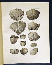 Usgs Fossils Of The Chapman Sandstone, Maine Original with All Plates 1916