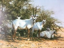 ARABIAN ORYX ~ DAVID SHEPHERD SIGNED LIMITED EDITION ~ NEVER FRAMED