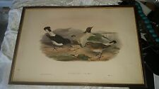 H.C. Richter & John Gould 1850-1853 Original hand colored Lithograph Birds Asia