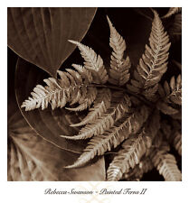 Painted Ferns II by Rebecca Swanson Art Print Poster 12x12