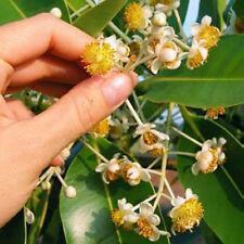 Tamanu Oil - Sacred Oil of Polynesia-16 fl oz-100% Pure