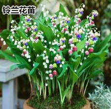 5Pcs Bulbs Seeds Plants Valley Flower Bonsai Bell Orchid Rich Aroma New