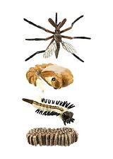 S662616 - Safari Wissenschaft Lebenszyklus eines Mosquito ( Set )