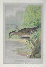 1898 Antique Art Color Lithograph 12.9x10 Female Wood Duck by John L Ridgway VTG