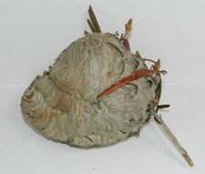 Hornet Nest Bee Hive Nest Science Taxidermy Rustic Decor
