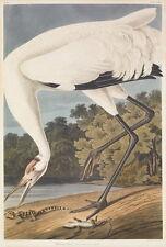 John James Audubon Hooping Crane Giclee Canvas Print Paintings Poster Reproducti