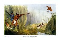 HUNTING BITTERN SHOOTING WITH DOGS SPANIELS COLOR AQUATIC GAME BIRD PRINT HUNT