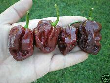 (20+) Trinidad 7 Pot (7-Pod) DOUGLAH  Pepper Seeds