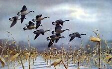 Les Kouba Nine Big Blacks Canadian Goose Print-Open Edition  23 x 15.5