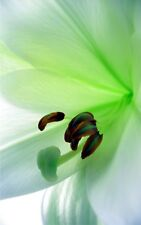 SUPERB ABSTRACT LILY FLOWER CANVAS #118 GREEN FLORAL FLOWER CANVAS PICTURE A1