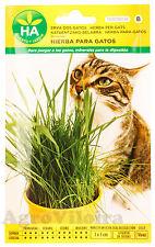 Herbe à Chat - 1500 Graines (15 g) - Complément Alimentaire - HA